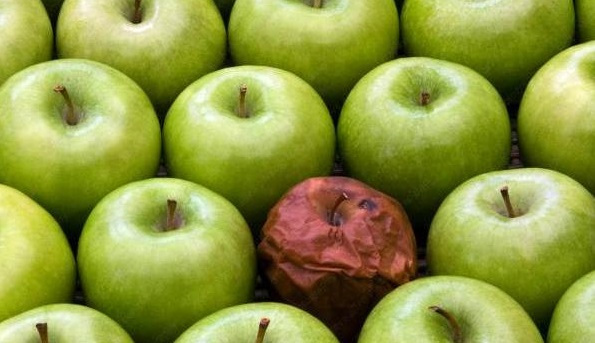 Building Culture – Bad Apples